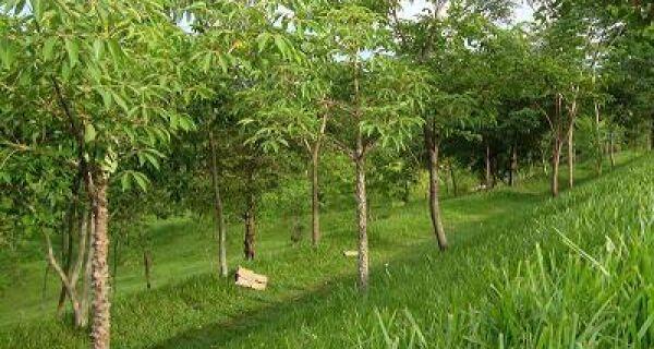 Código Florestal: Senadores sugerem incentivos para reflorestamento em propriedade familiar