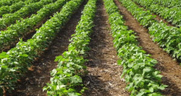 Fileiras de cultivos protegem animais nas lavouras