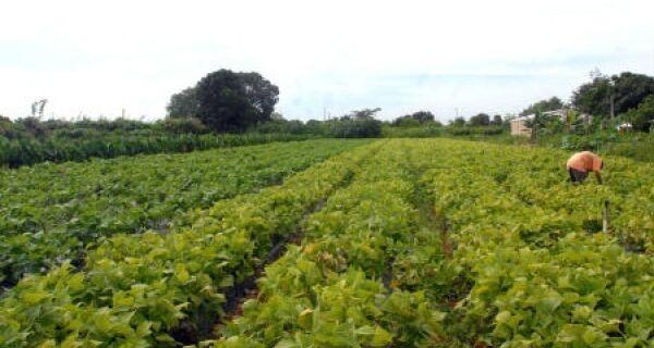 Ivinhema incentiva novas ações na agricultura familiar