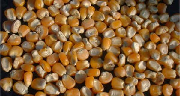 """China vive """"era de ouro"""" do consumo e aumenta importações de soja e milho"""