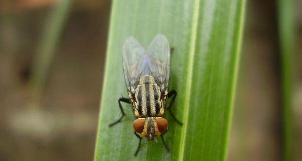 Workshop debate controle da mosca-dos-estábulos
