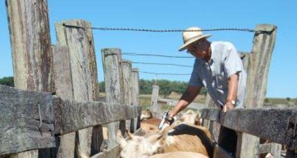 Paraguai admite falha na vacinação do gado