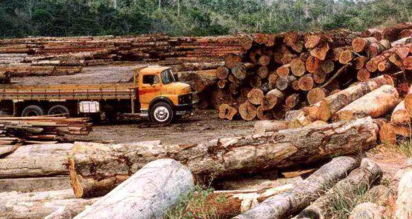 Em 15 anos, mundo perdeu 10 hectares de floresta por minuto