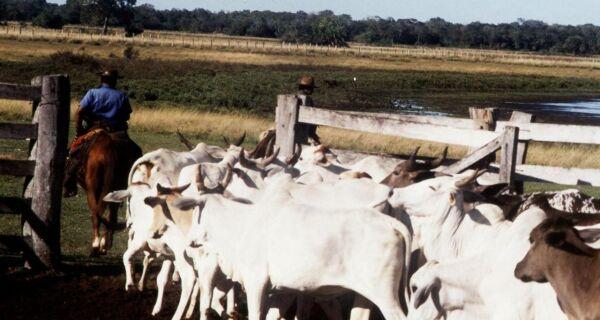 Dois meses após foco de aftosa, Paraguai perde status de área livre