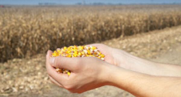 Preço da semente de milho atinge recorde em Mato Grosso