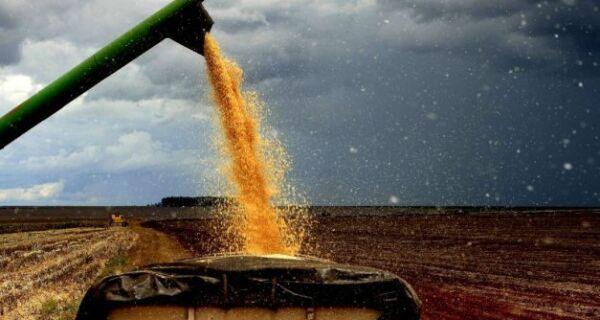 Mato Grosso do Sul já colheu 50% da safra