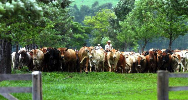 Paraguai: exportações de carne caíram pela metade em relação a jan/2011