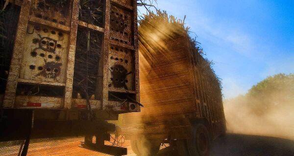 Safra de cana do centro-sul deve alcançar 521 milhões de toneladas