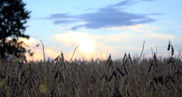 Estudo aponta produtividade da soja em 13 municípios de MS