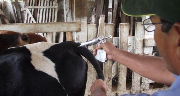 Produtores querem garantir vacinação em áreas invadidas no Pantanal