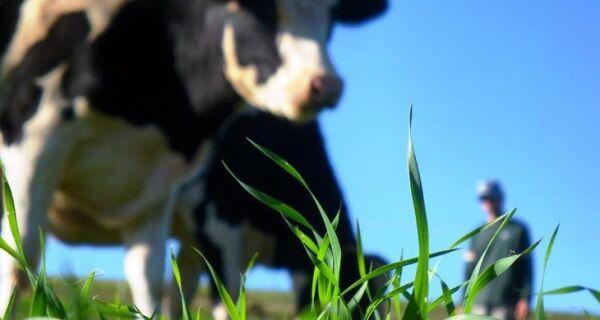 Produção de leite cresce mais de 60% em oito anos no Rio Grande do Sul
