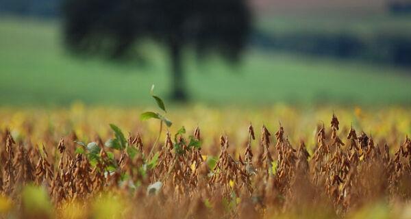 MS inicia junho com valorização da saca da soja em 43%