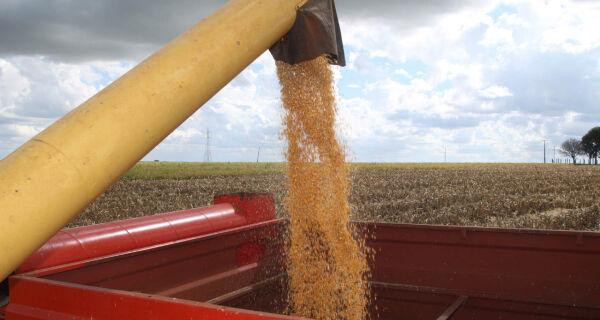 Produção de milho safrinha de Mato Grosso deve ter alta de 87,5% este ano