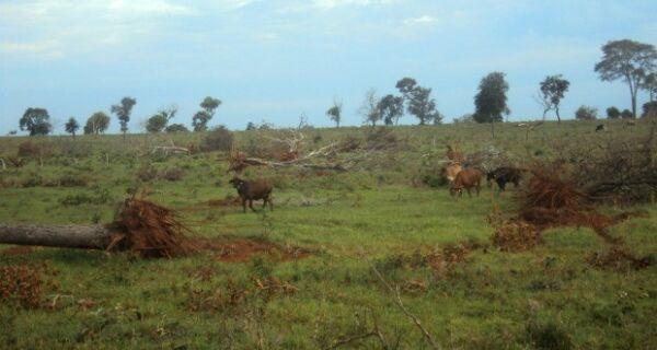 Polícia Ambiental flagra exploração ilegal de madeira em lote em MS