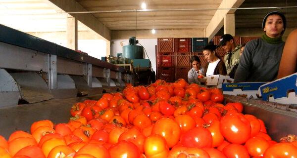 Cooperativas movimentam mercado da agricultura em MS e já somam 100 mil cooperados