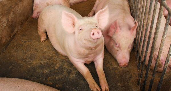 Argentina libera importação de carne suína brasileira