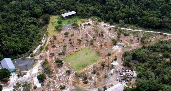 Desmatamento na Amazônia Legal recua 66% em junho