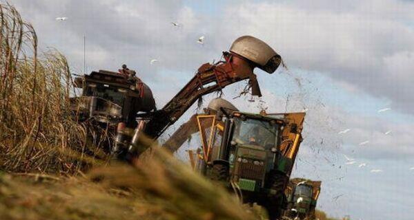 Safra de cana-de-açúcar será próximo de 600 milhões de toneladas