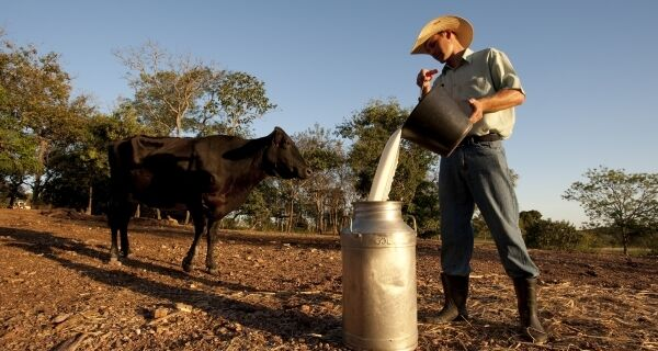 Brasil é o segundo maior produtor de leite do mundo