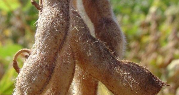 Plantio da soja deve acontecer com 30 dias de atraso em Sidrolândia