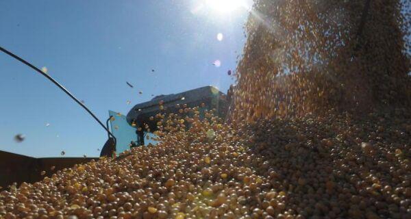 Exportação de soja do Brasil deve cair mais de 50% neste mês