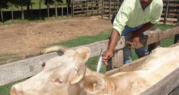 Vacinação contra febre aftosa é flexibilizada em municípios com seca