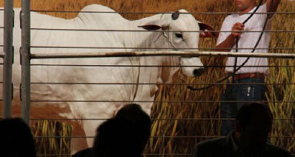 Leilão Campo Grande Embryo fatura R$ 1,25 milhão na Expoinel MS 2012