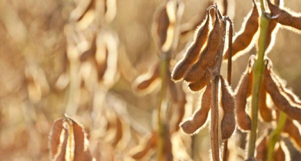 MS já tem 90% da soja plantada