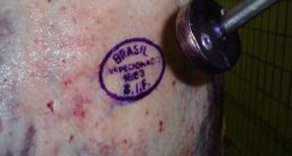 Irã segue Japão e Rússia e põe carne bovina brasileira sob suspeita