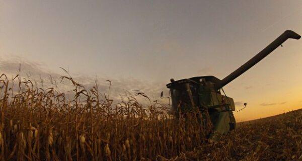 Milho: Quebra de safra nos EUA alavanca preços e exportações do BR