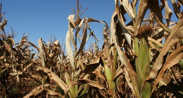 Lavouras de Dourados enfrentam nova seca, após estiagem de 28 dias em dezembro
