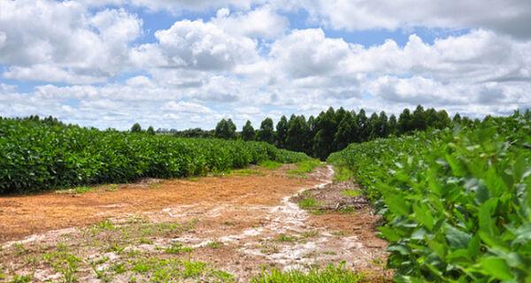 MS inicia colheita da soja com estimativa de movimentar R$ 5 bi
