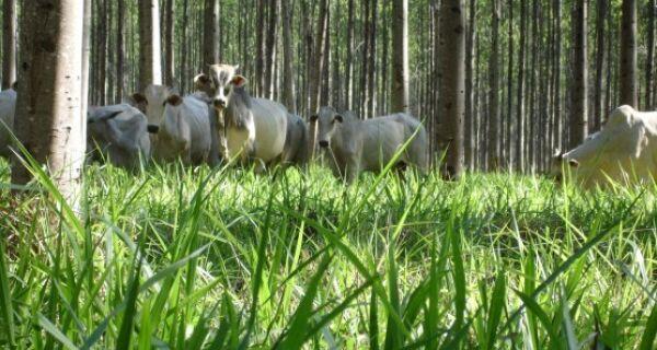 Dia de campo irá tratar de integração lavoura-pecuária-floresta
