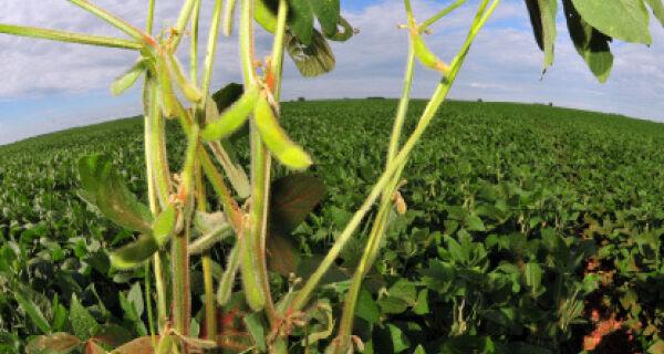 Alta da soja poderá fazer de 2013 o ano do agronegócio