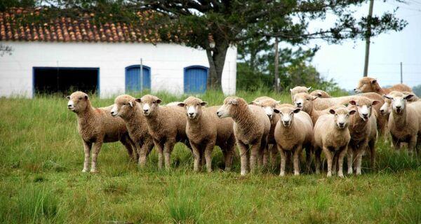 Encontro de ovinocultura destaca mudança no perfil do produtor rural