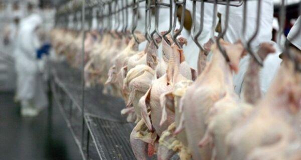 Centro-Oeste garante aumento de receita cambial do frango no 1º quadrimestre