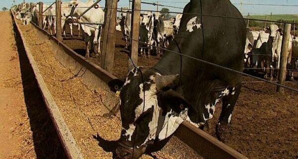 Alimentos alternativos à forrageira podem evitar prejuízos na pecuária em períodos de seca