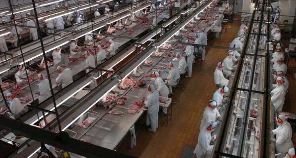 Primeiro trimestre do ano teve maior abate de bovinos já registrado para o período
