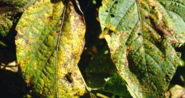 Produção agrícola da safra 2013/2014 do Brasil está ameaçada por pragas, diz CNA