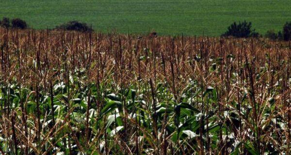 Governo libera subsídio de R$ 700 milhões para manter preços do milho