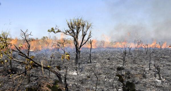Número de queimadas  é 60% menor que no mesmo período do ano passado
