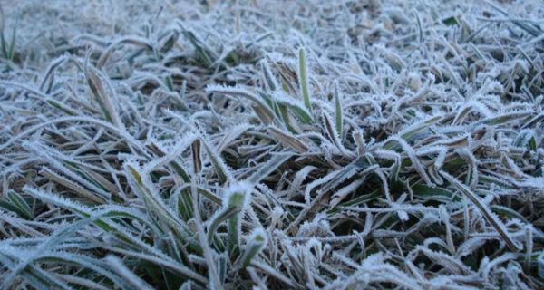 Frente fria pode parar colheita de cana; Somar prevê geadas em MS e PR