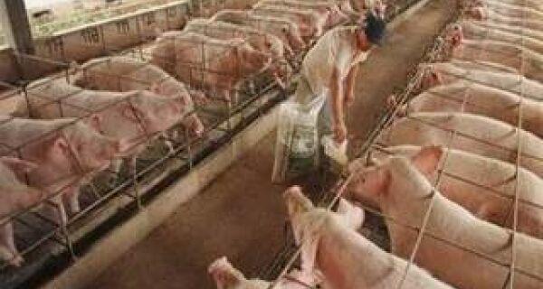 LCA vê alta de apenas 0,2% na produção de carne suína neste ano