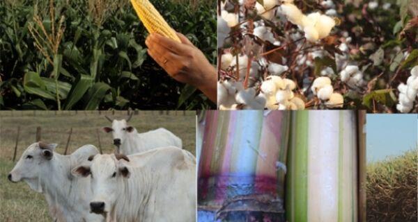 PIB do agronegócio cresce 3,13% no primeiro semestre de 2013