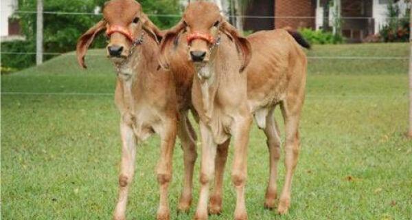 Aprovada normas que regulamentam o comércio de clones de animais