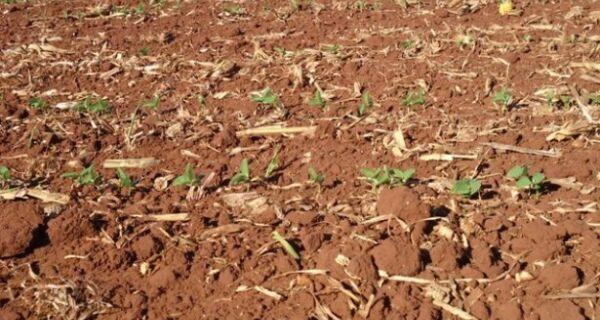 Plantio da soja se aproxima dos 70% em MS