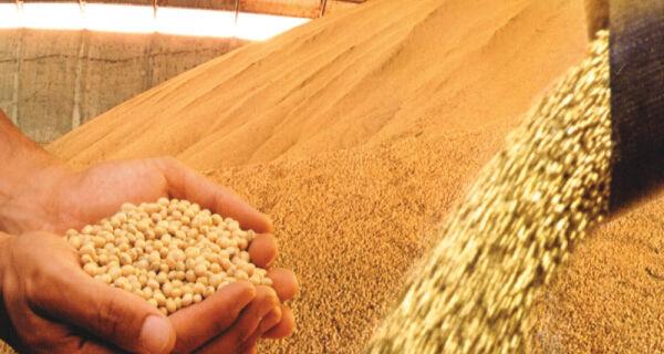 Produção de grãos pode ultrapassar 196 milhões de t