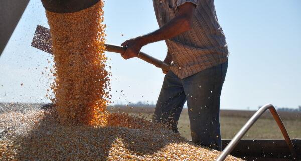 Estoques enxutos devem limitar queda dos preços do milho