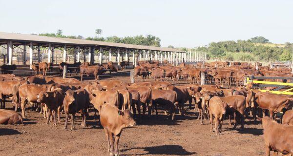 CP CRV Lagoa 2016 tem a participação de 471 animais de sete raças