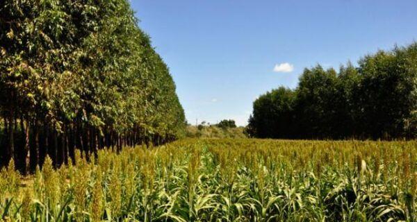 Integração lavoura-pecuária-floresta é mais lucrativa que culturas exclusivas
